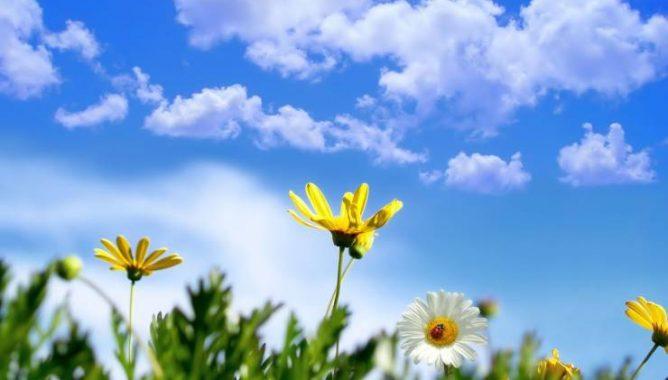 سحب منخفضة وأجواء مستقرة مع سماء صافية اليوم الثلاثاء