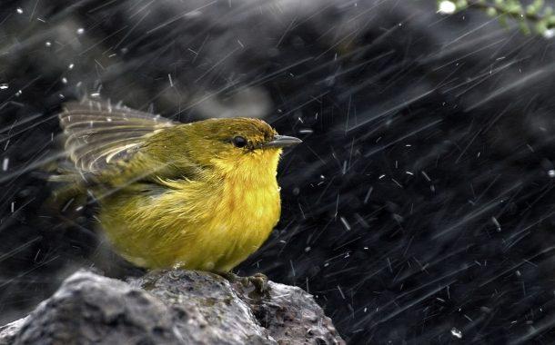 الحالة الجوية مهيأة لنزول أمطار اليوم الخميس