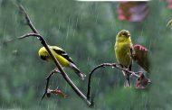 سحب منخفضة كثيفة، ونزول أمطار وزخات مطرية بهذه المناطق اليوم الاثنين