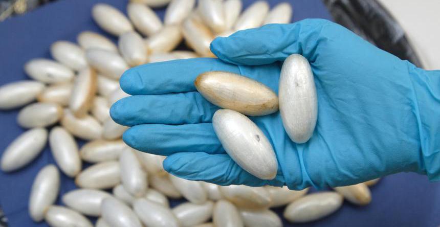تفريغ الكوكايين من أمعاء برازيلية..