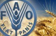 مؤشر (الفاو) لأسعار الأغذية يرتفع للشهر التاسع على التوالي