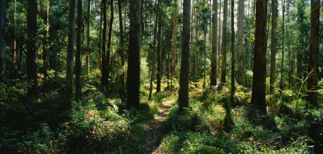 حملة لتنظيف الغابات من 28 أبريل إلى 05 ماي المقبل