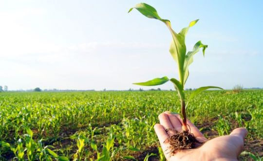 ارتفاع الطلب العالمي على الإنتاج الزراعي..