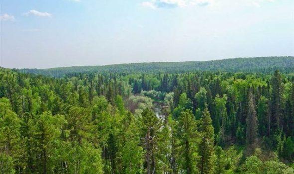 الغابات بالمغرب