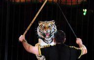 نمر يوضع في الأسر مدى الحياة لقتله ثلاثة أشخاص