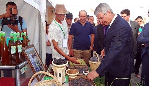مهرجان لإبراز مؤهلات قطاع التين