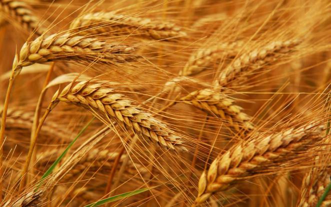 الفاو: انخفاض أسعار الغذاء العالمية في غشت 2019