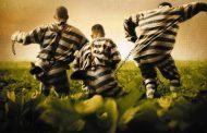 هروبُ أزيد من 1350 سجينا