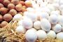 البيضة المغربية تخسر 5ر3 مليون درهم في اليوم