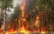 الحرائق تدمر أزيد من 140 ألف هكتار من الغابات في سيبيريا