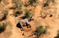 بوتسوانا.. نفوق 350 فيلا على الأقل بشكل غامض