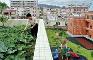 جهاز للزراعة على الأسطح في المناطق الحضرية
