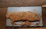 تحنيط الحيوانات في الحضارة المصرية القديمة