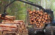 تراجع معدل قطع الأشجار في غابات الأمازون