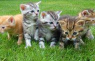 خمس سنوات سجنا لبريطاني قتل تسع قطط