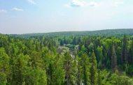 الغابات توفر أكثر من مليون يوم عمل في السنة