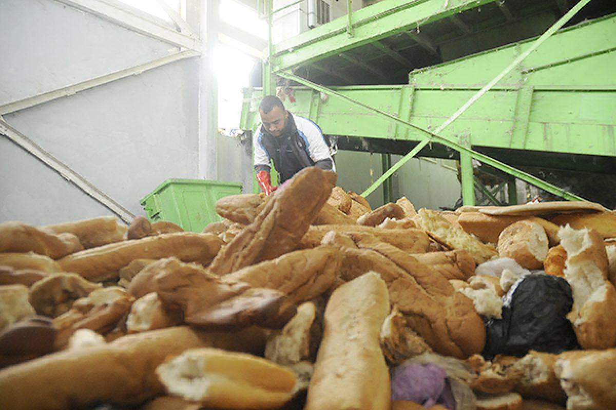 يوميا، الجزائريون يرمون 10 ملايين قطعة خبز في القمامات