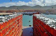 مفرغات الأسماك بميناء سيدي إفني.. أزيد من 173 مليون درهم قيمة خلال 2020